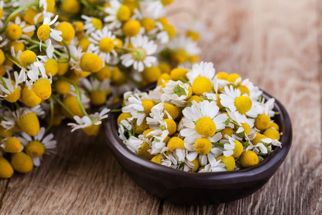 bisabolol_is the active ingredient of chamomile